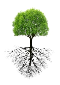 Genealogy Discoveries