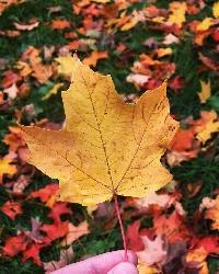 Fall survival hacks 🍂