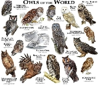 Pinterest - Owls