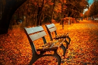 Autumn Postcard or Notecard 2019