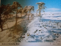 Mid November snow scene postcard