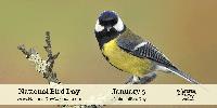 AN: National Bird Day 2020 (US)