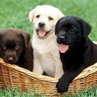 Pinterest Boards #1 - Puppies