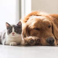 Swap 11: Pets