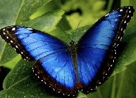 I ♥️ Butterflies - Int'l
