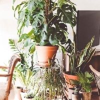 Swap #19: Plants