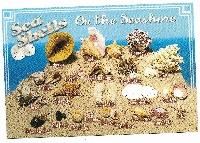 Seashells Postcard Swap