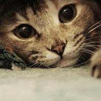 Let's send cat postcards!