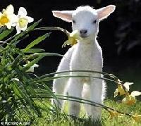 Profile Swap - Spring Baby Animals