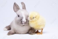 Profile Swap - Bunnies and chicks