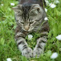 PL #31: Cats