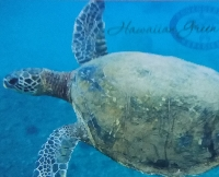 2020 Postcard swap #17 -  sea Animals