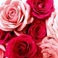 PDS #30: Floral