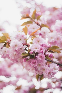 TPC: Monthly Favorites ~ April