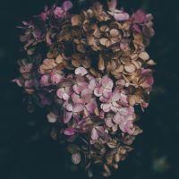 TPC: Botanical Swap