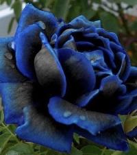 I ♥️ Flowers - USA