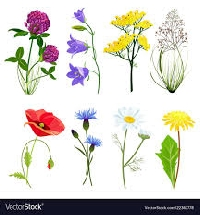 🌿💐🌵MEGA Botanical PC Swap USA #19