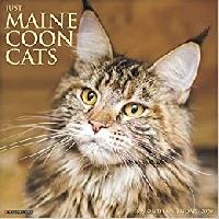 AN: World Cat Day (US)