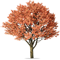 CPG: Mixed Media Art Tag 🍁 🌼 🍂 Autumn 🍂 🌼 🍁