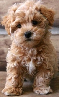 Pinterest - Dogs & Puppies
