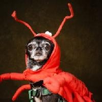 ESG: Dogs in costumes Profile deco