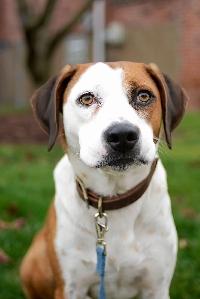 WIYM: DOG POSTCARD 12/2020