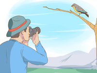 Bird Watching via PCs Swap