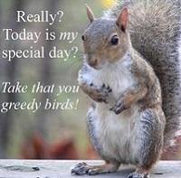 Squirrel appreciation day profile decorations
