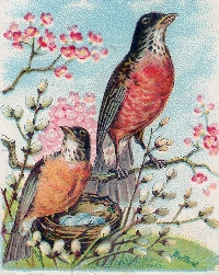 MFF: Bird-of-the-Month Tag: March:  Robin