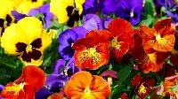 CS: Floral Fun Postcard Swap