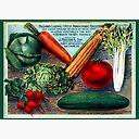 🌱Vintage Seed Catalogue Postcard