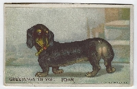 4 Animal postcards to 2 Partners #8