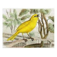 MFF: Bird-of-the-Month Tag: April: Canary