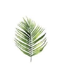QNT challenge Leaf #3 Palm leaf