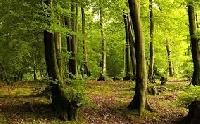 Woodland swap🌲🐿