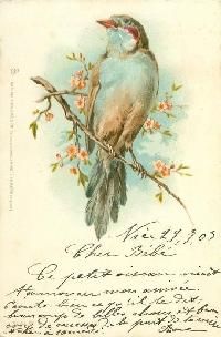 MFF:  3x5 Bird-themed Skinny/Journal Card