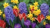 Profile Deco Swap - Spring Flowers