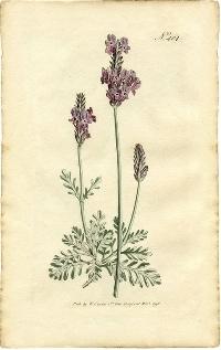 A Postcard Herbal Round 1 Redo