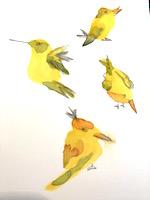 OMAE:  watercolor + doodles BIRD swap