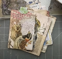 YTPC: Vellum Pocket Journal Cards