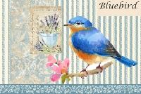 MFF: 3x5 Collage Index Card:  Bluebird