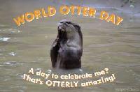 Profile Deco Swap - World Otter Day