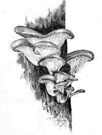 Mushroom PC 🍄