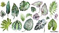 🌿💐🌵MEGA Botanical PC Swap USA #21