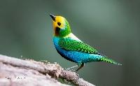 EATC: Bird ATC