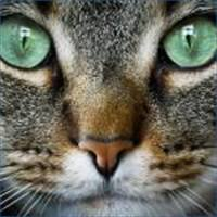 CS:send a cat postcard or notecard