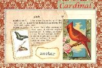 MFF: 3x5 Collage Index Card:  Cardinal