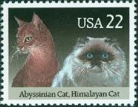 KKL: Send a Note on a Kitty Notecard