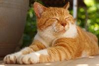 ESO: Cats
