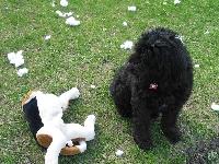 Small Doggie Toy Swap Round 2